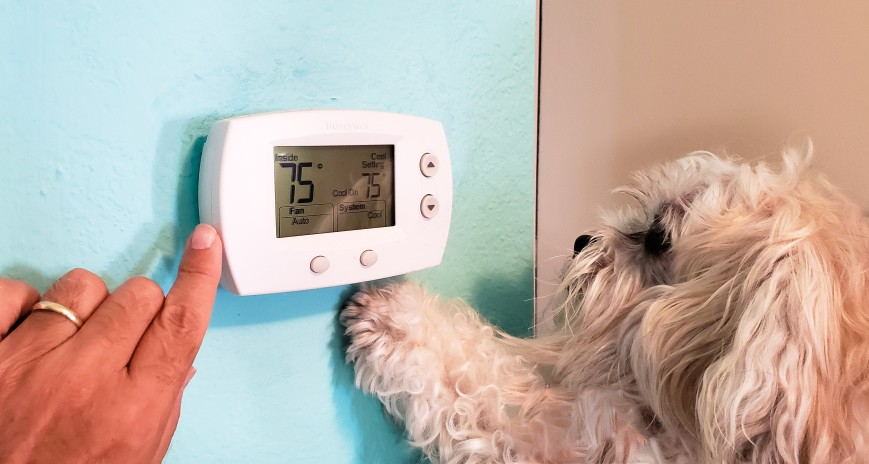 fuzzy dog and thermostat