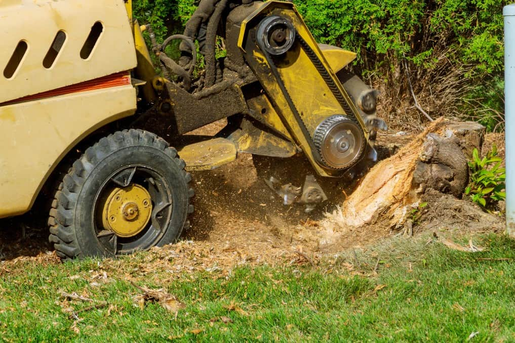 stump being removed