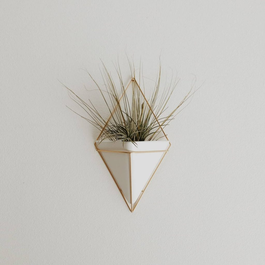 air plant on a wall