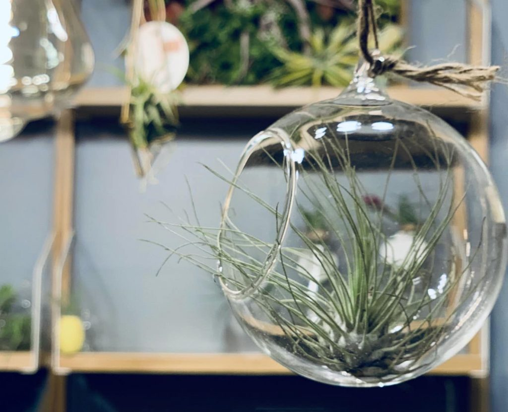 decorative way to include plants in your home