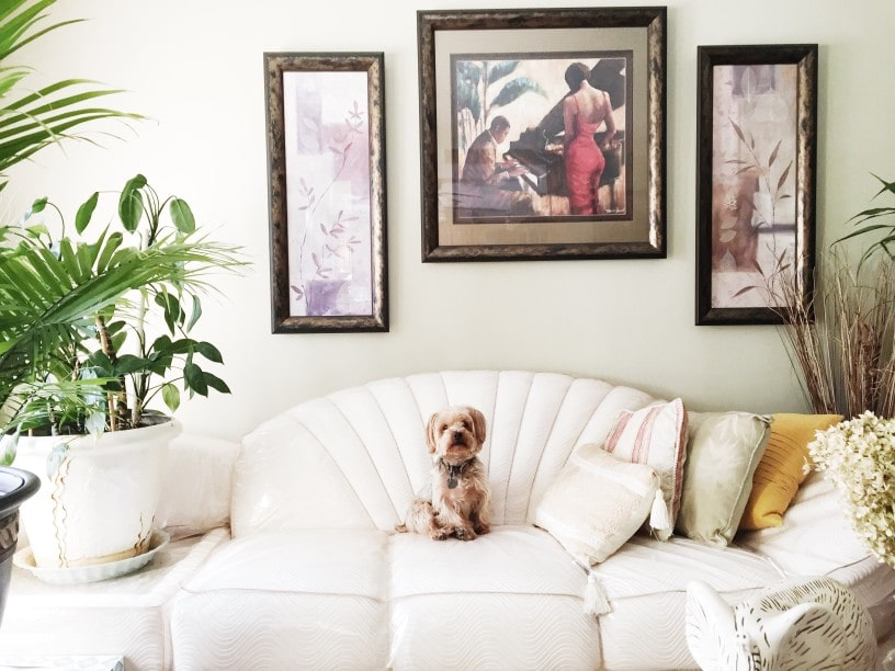 dog on a couch