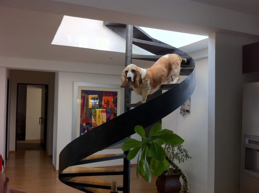 dog walking down the stairs