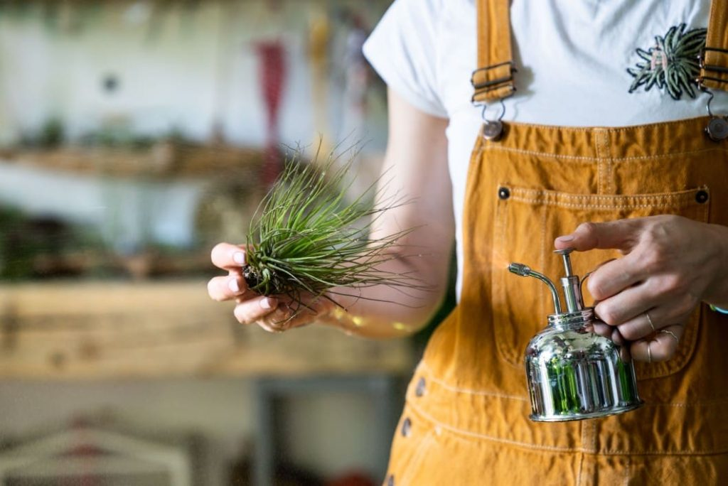 person wearing overalls taking care of an air plant