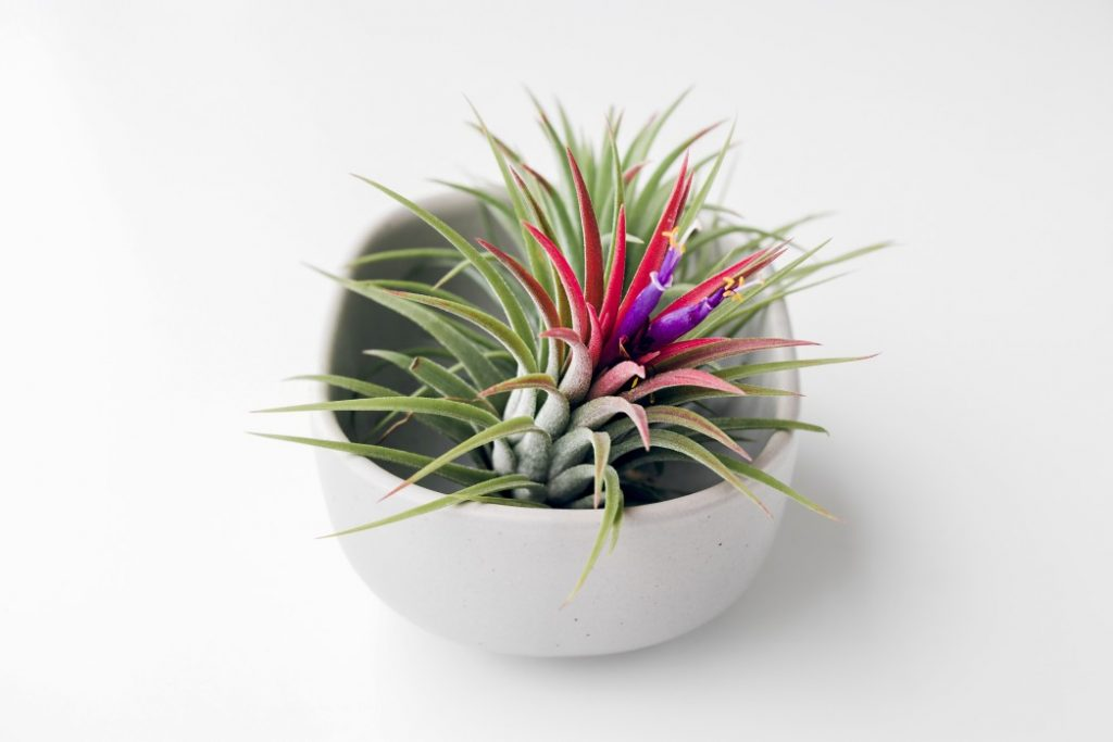 plant on a white background